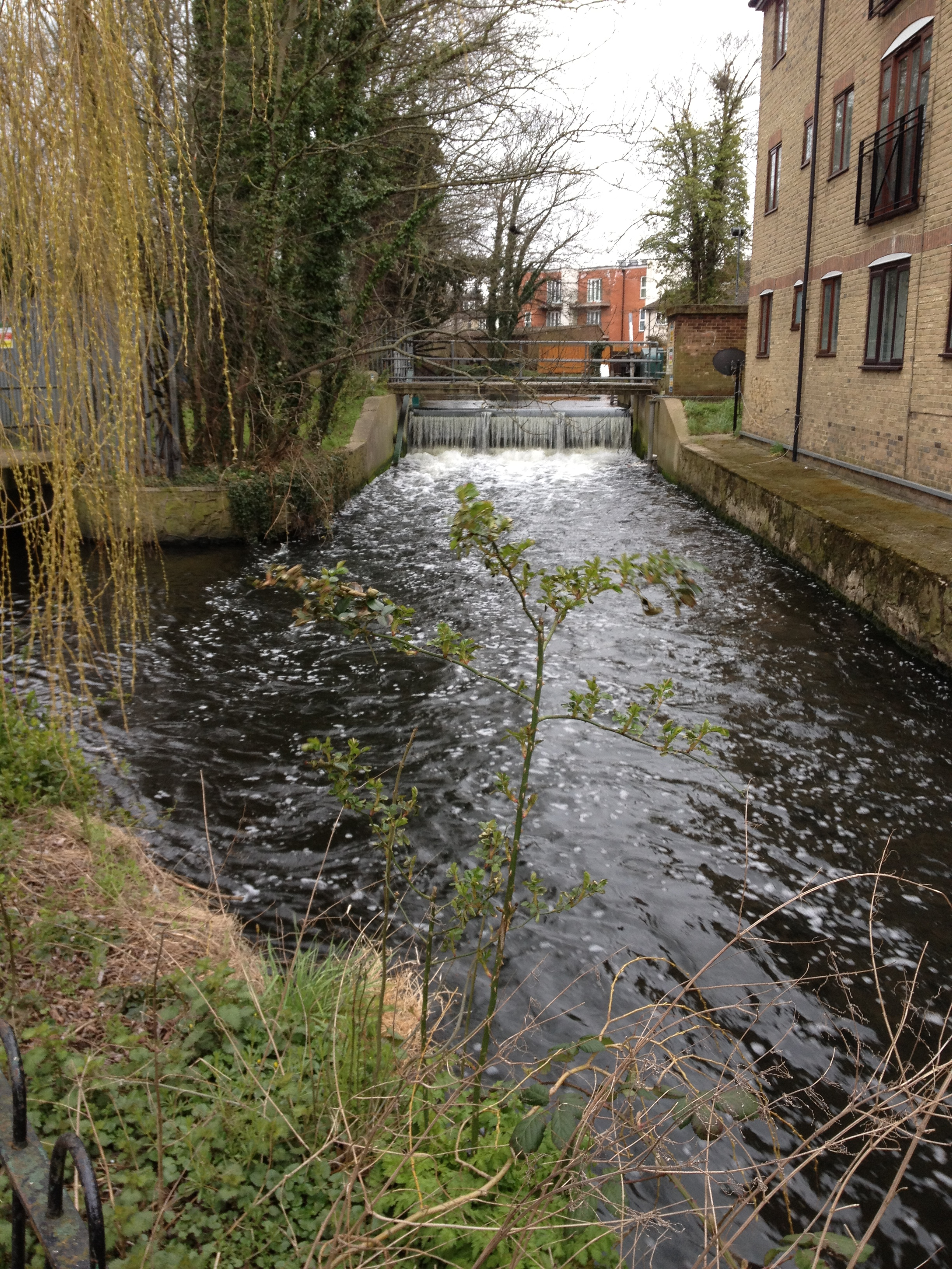River_Wandle1