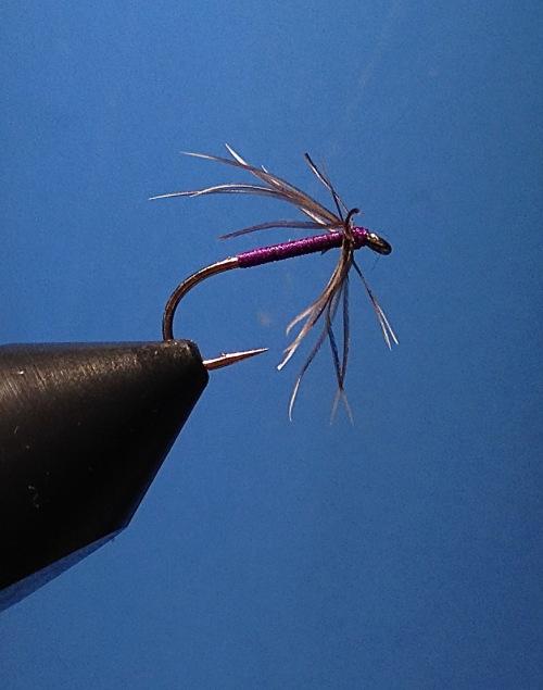 Snipe & Purple – Hechel: Schnepfe