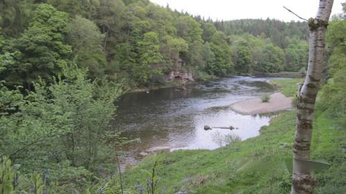 River Eden: Ruhe und Abgeschiedenheit, Forelle, Äsche und Lachs in stattlichen Größen