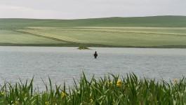 Fliegenfischen Orkney Inseln – nachtlose Sommer, windige Seen, butterbauchige Forellen – Teil 2
