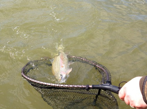 Stillwasser Fliegenfischen10