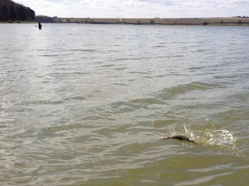 Stillwasser Fliegenfischen3