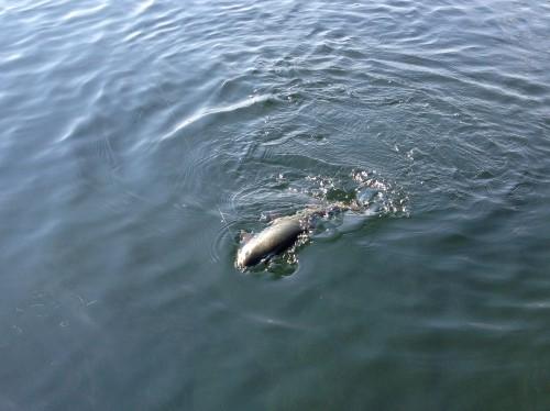Stillwasser Fliegenfischen6