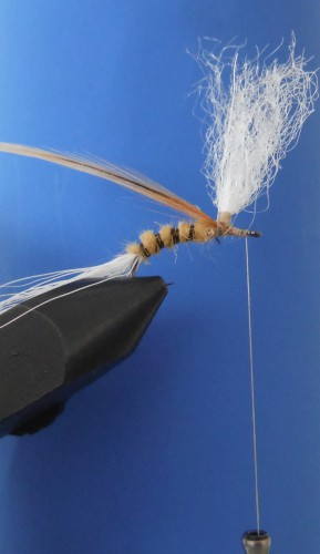 TR Mayfly Emerger7