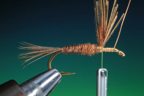 BOC PTN Pheasant Tail 10