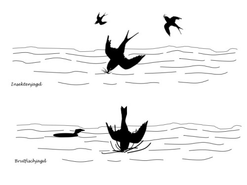 Stillwasser Fischen Vogeljagd