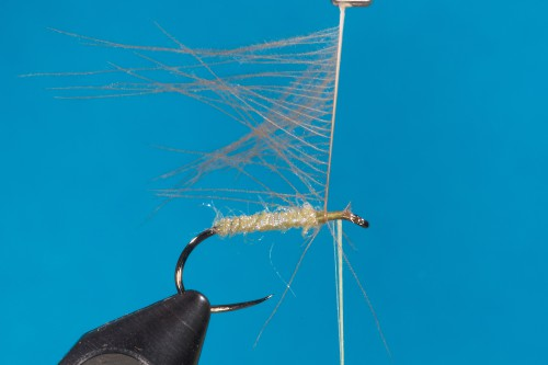 WR Buck Caddis Marbled Sedge3