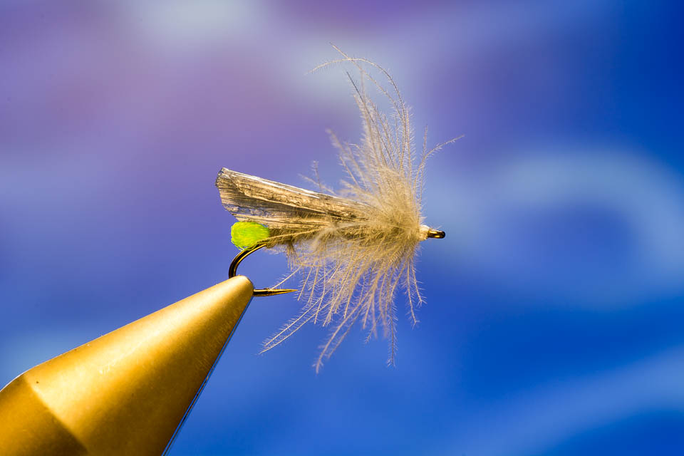 Fliege des monats september needle fly steinfliege for Fliegen larve