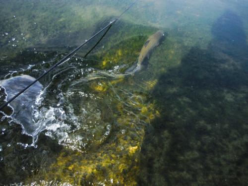 Stillwasser Fliegenfischen Eyebrook C&R
