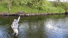 Schottlands River Annan – eine Reise wert!