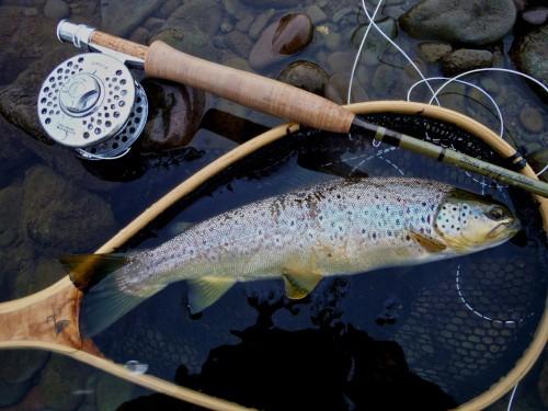 River Annan Forelle
