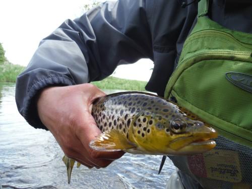 River Annan Trout3