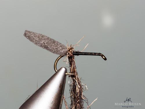 Marco Reisen beetle (4)