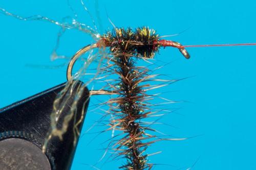 Walter Reisinger Beetle _DSC4850