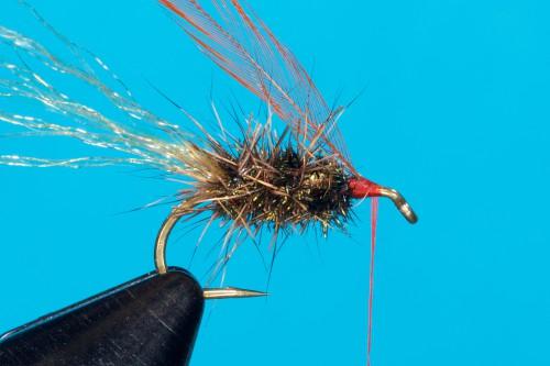 Walter Reisinger Beetle _DSC4851