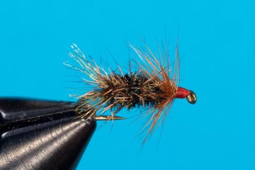 Walter Reisinger Beetle _DSC4853