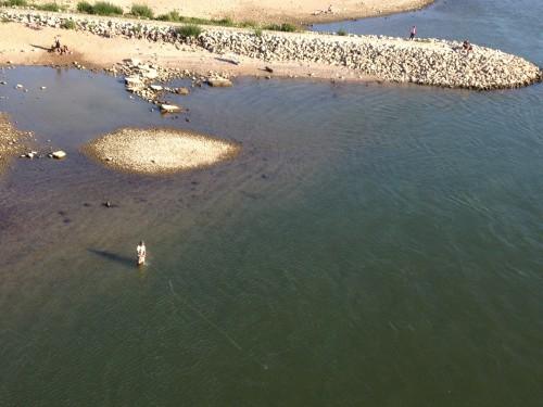 Fliegenfischen Rhein