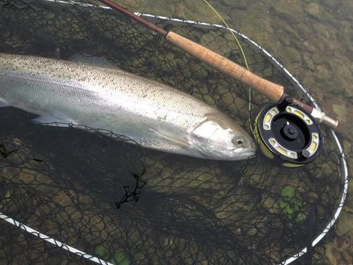 Stillwasser_Fliegenfischen_Rutland_Water_Regenbogenforelle