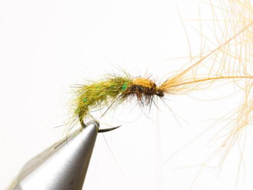 Rhyacophila_Caddis_Sedge_Pupa11