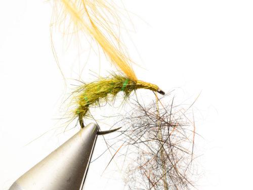 Rhyacophila_Caddis_Sedge_Pupa8
