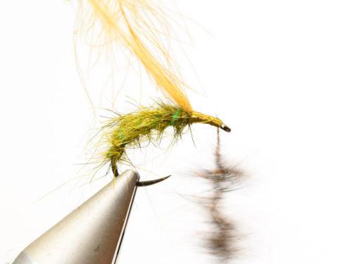 Rhyacophila_Caddis_Sedge_Pupa9