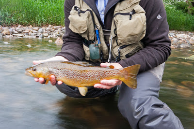 fliegenfischen_river_eden_forelle