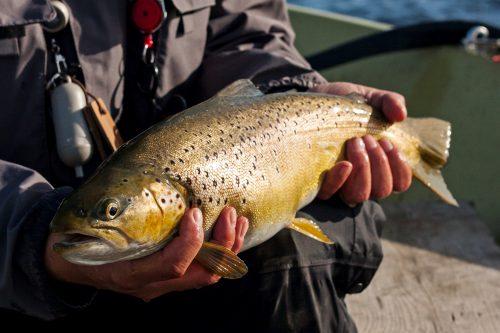 malham_tarn_tankred_rinder_brown_trout2