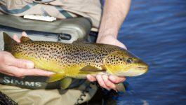 Paradies gefunden – Fliegenfischen in Nordengland