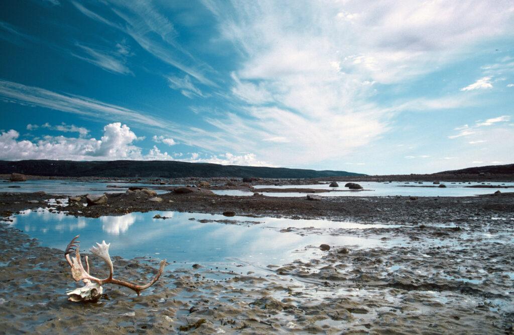 Ferne Welt (Charles Rangeley-Wilson) - Fliegenfischen in Alaska